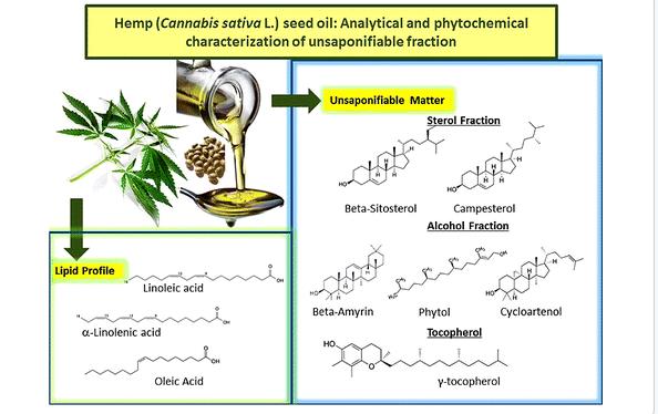 cannabis sativa, salud