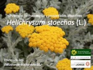 Les-helichrysum-oviedo