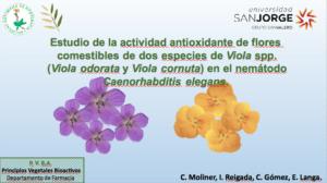 Moliner-viola-oviedo
